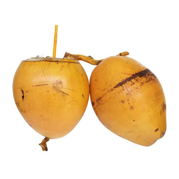 海南金椰|树上新鲜采摘直发